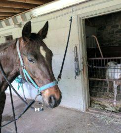 13 Hands Equine Rescue